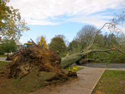 A large tree blocks the road from Harkness Chapel to Horizon House. Photo by Meredith Boyle '13, courtesy of The College Voice.