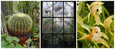 Picture of plants in the greenhouse.